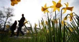 LONDON, ENGLAND - MARCH 06:  Visitors to The Royal Botanical Gardens, Kew walk past daffodils on March 6, 2014 in London, England. Parts of the United Kingdom are experiencing warm weather and sunshine.  (Photo by Peter Macdiarmid/Getty Images)