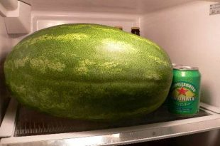 lubenica-u-frizideru