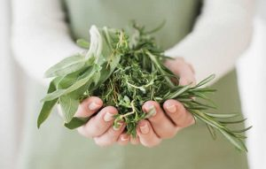 ljekovite-biljkee