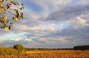 vojvodina-ravnica-jesen-jesenji-priroda-atari-rtv-(minja-sakan)-jpg_660x330