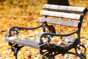 jesen-vjeverica-Foto-Nenad-Mihajlovic-RAS-Srbija