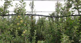 jabuka-zalivni-sistem