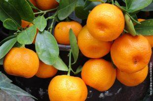 Mandarine-slika