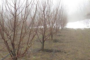Daragomir-Tulovic-zasad-kruska-zima-santa-marija-i-karmen-bazen-grane-Gornji-MIlanovac-Grabovica-46-1