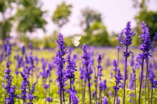 flower-1563088_960_720