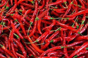 ljuta-paprika-1