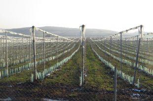 ceska-institut-vocarstvo-valjevci-tura-vocnjak-hladnjaca-jabuke-73