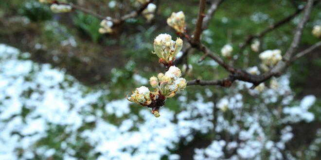 voce-cvat-snijeg-mraz-03-foto-S-PASALIC