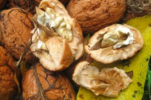 fresh-walnuts-1100489_960_720